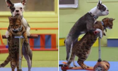 Vídeo: juntos, cão e gato batem recorde mundial de velocidade sobre patinete