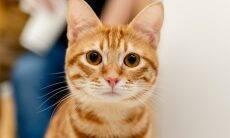 Remédios de fácil aplicação ajudam a tratar do seu gato e sobreviver pra contar