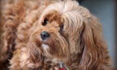 Durante a vida de um cão, donos passam o equivalente a dois meses limpando a casa por causa do pet