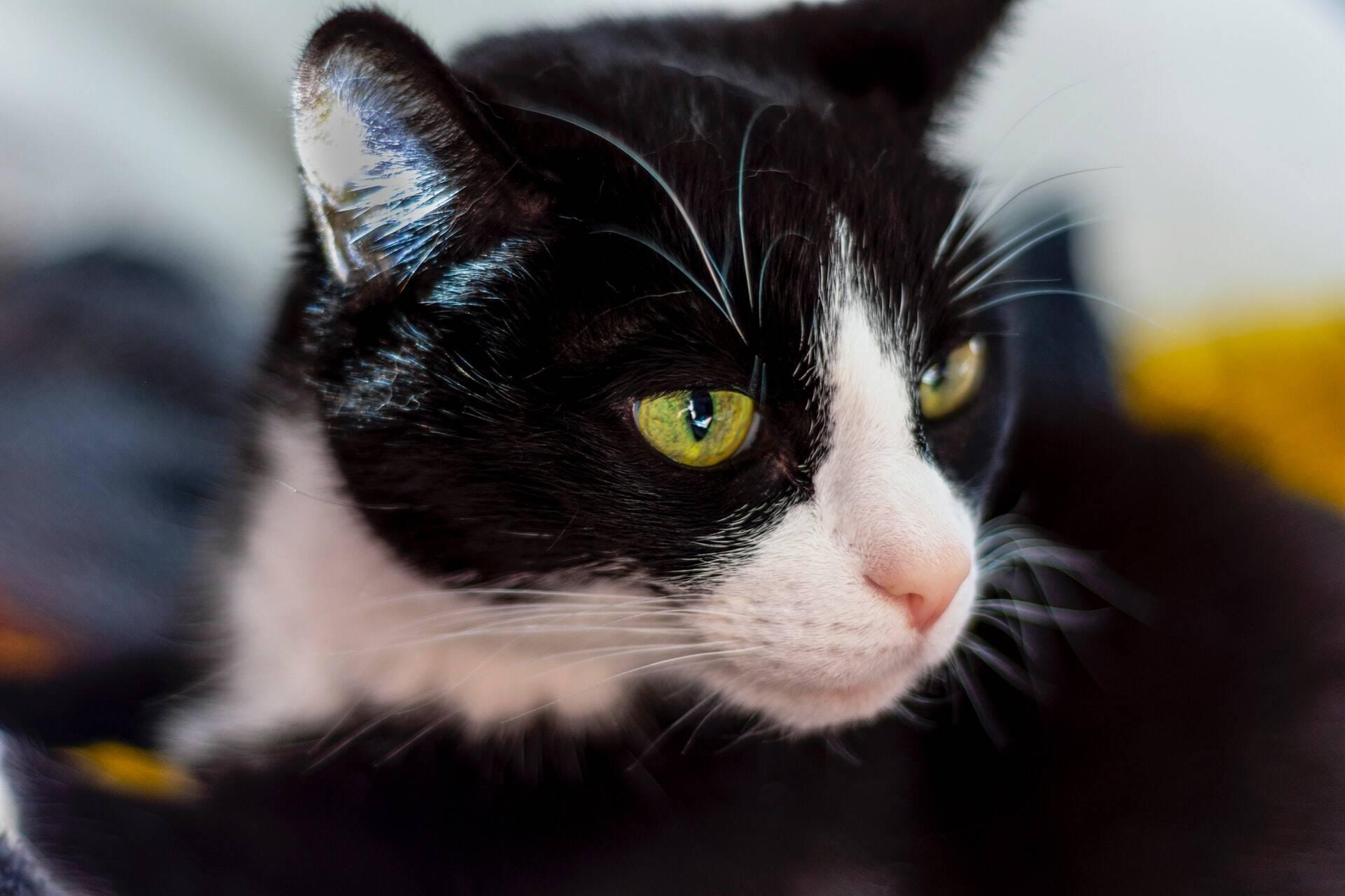 Fotos de abusos contra gatos chocam usuários do Instagram; entenda