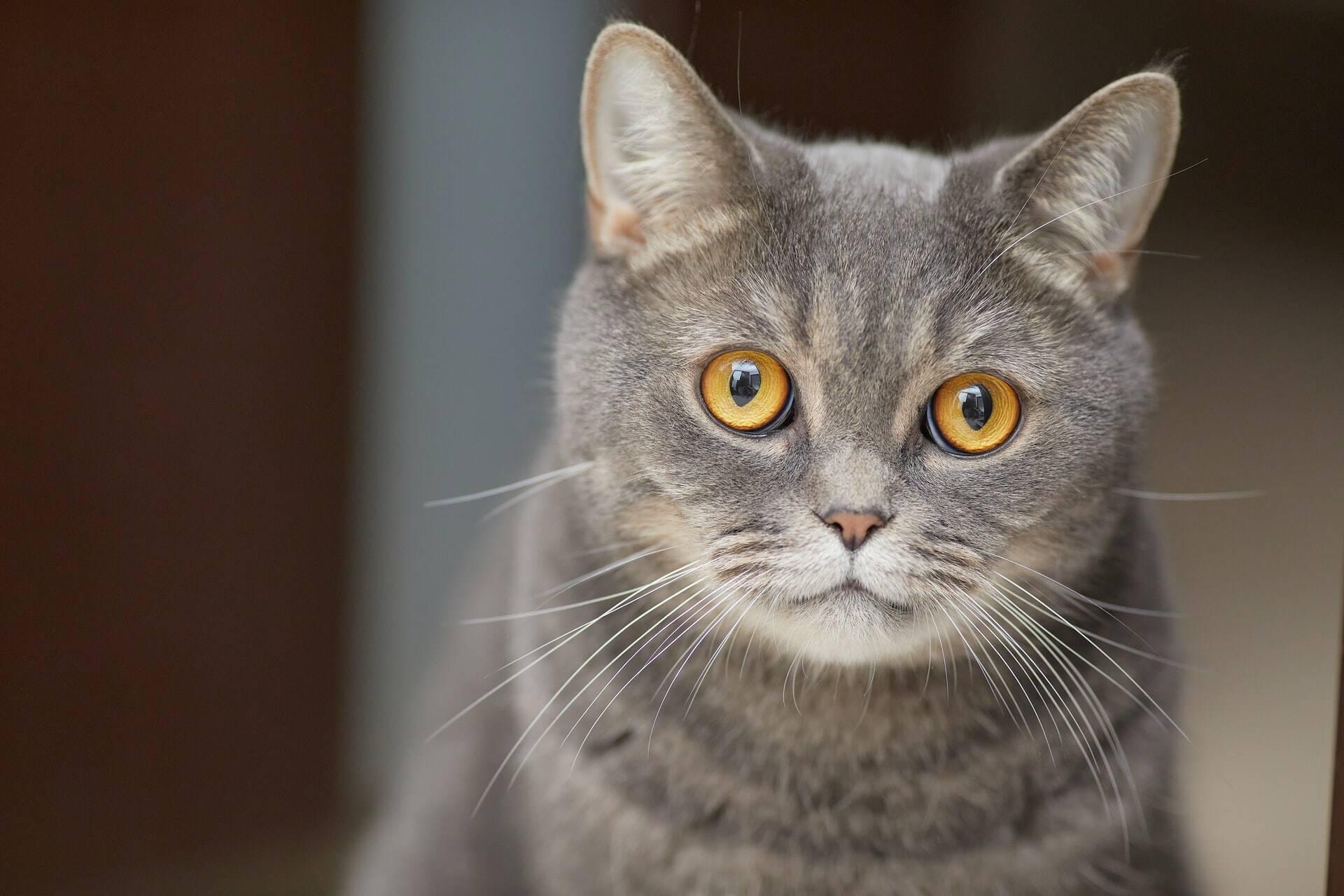 Aplicativo que identifica emoções dos gatos viraliza na China