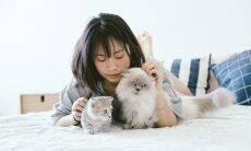 Gatos são tão apegados aos seus donos quanto os cães, indica estudo