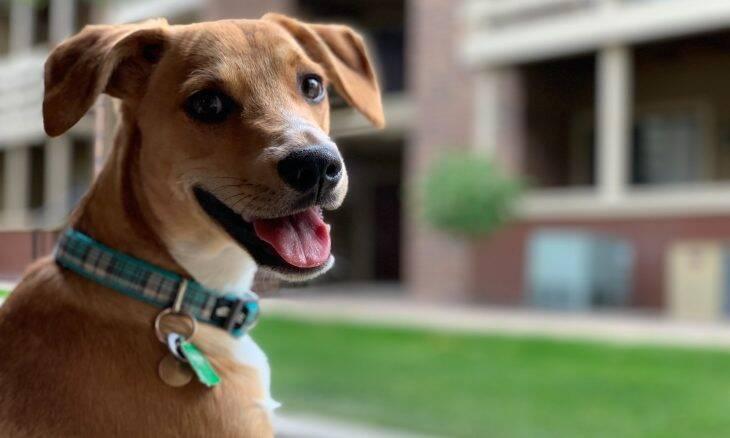 4 dicas preciosas para esticar ao máximo a vida do seu pet