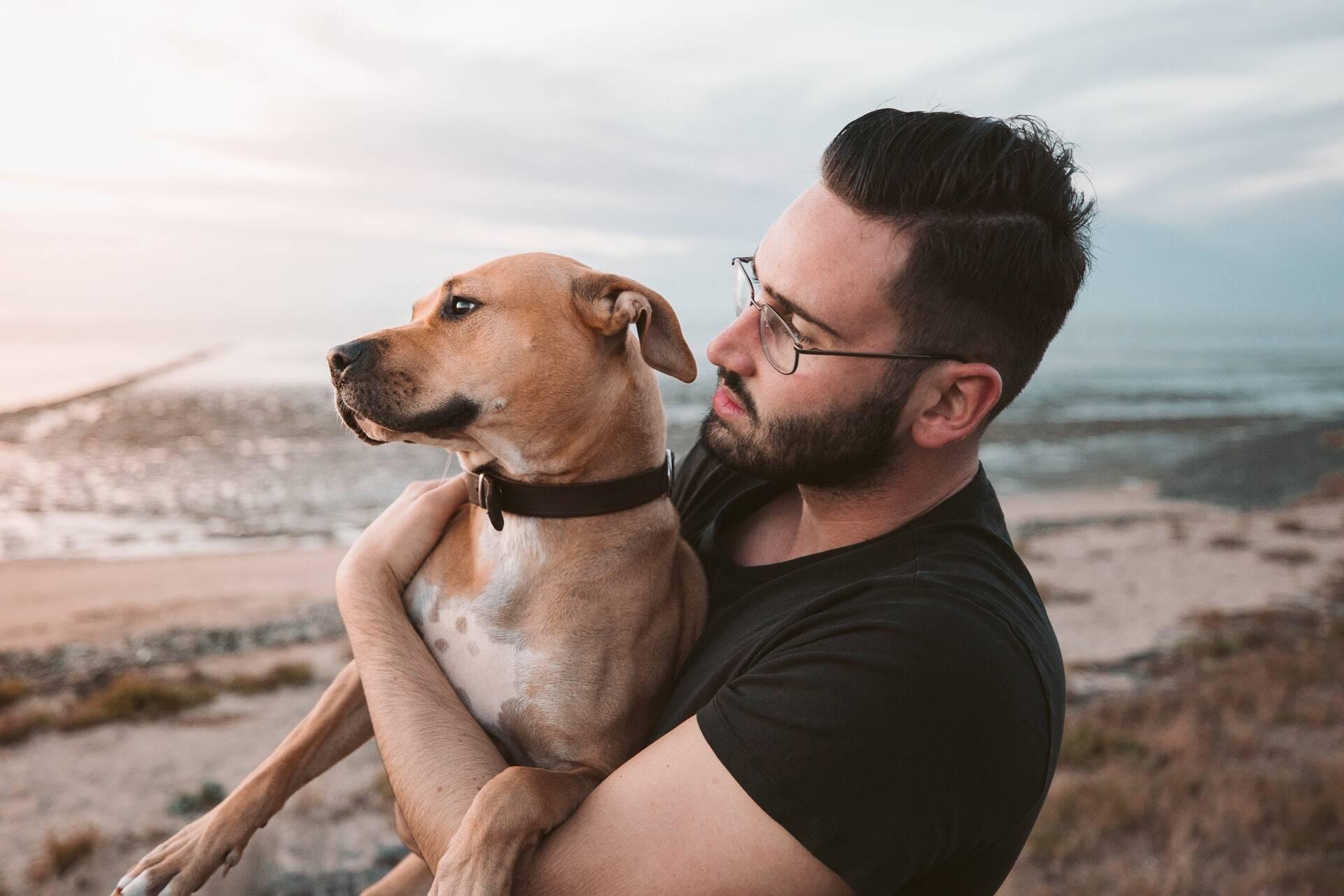 Cães sabem quando humanos cometem erros, indica estudo