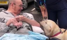 Comovente: após dois anos em tratamento, dono e cão se reencontram