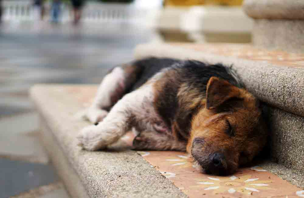 Quantas horas meu cão deve dormir? Veterinária responde e diz quando você deve se preocupar