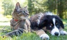 Quem é mais feliz, dono de cão ou de gato? Uma pesquisa traz a resposta