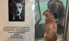 Post viraliza na internet e ajuda dono a reencontrar seu cão