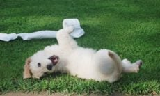 Especialistas respondem às 6 questões sobre cocô de cachorro mais feitas no Google