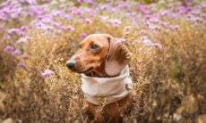 Flores são nocivas para o seu pet? Confira dicas para preservar a saúde de cães e gatos