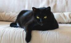 Crendices: por que os gatos pretos são associados com Halloween e má sorte