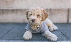 Fim dos embolados: saiba como deixar os pelos do seu cão livre de nós