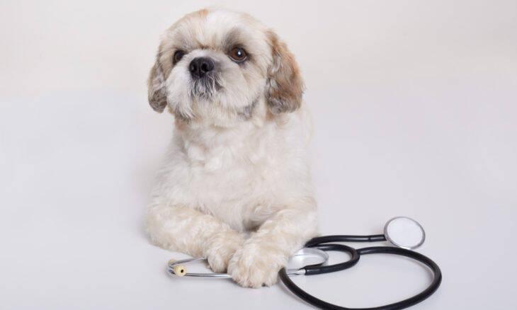 Empresa lança seguro de saúde para cães e gatos a partir de R$ 19,90 por mês