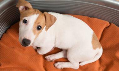Principal preocupação de quem fica internado é quem cuida dos pets, mostra estudo