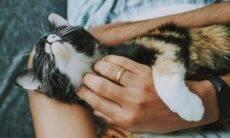 As 10 coisas que os gatos mais amam