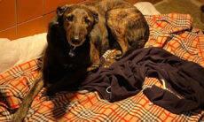 Conheça a história de Joe, o cão que passa o dia abraçado com a blusa de seu dono morto