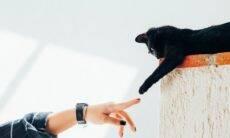 Especialista ensina como melhorar a comunicação entre você e seu gato