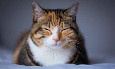 Confira 4 curiosidades surpreendentes a respeito dos gatos