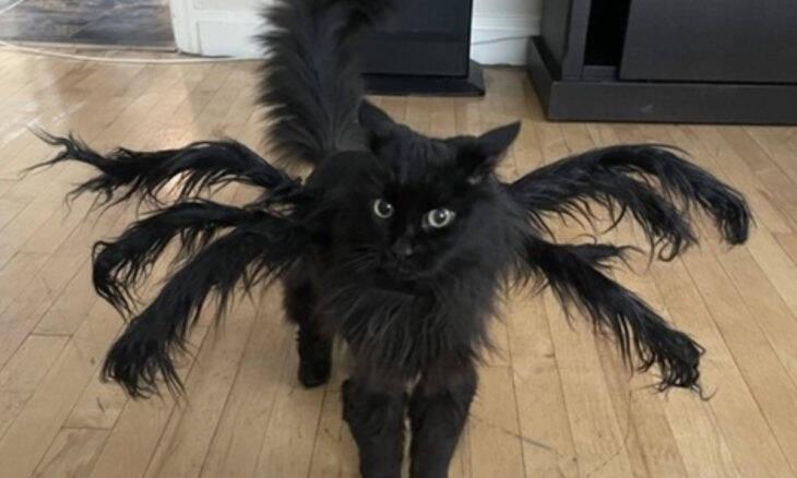 Dona transforma seu gato em celebridade nas redes com fantasias de terror