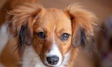 Outubro Rosa: os cuidados para prevenir o câncer de mama em gatas e cadelas