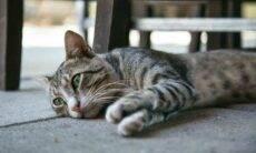 Conheça 9 sinais de depressão em gatos e 8 maneiras de ajudá-los (Foto: Milada Vigerova/Unsplash)