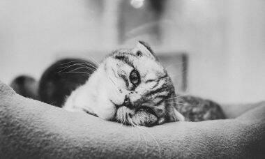 Dona mata gatinho de três meses usando a máquina de lavar roupas