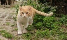 4 razões para você trazer um cão ou gato pra dentro de casa agora!