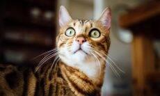 Teste simples mostra se o seu gato reconhece o próprio nome