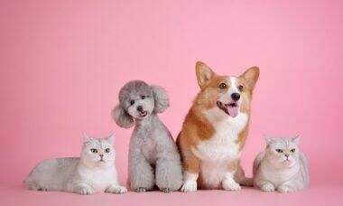 Quem é mais inteligente, cão ou gato? A resposta não é simples, diz a ciência