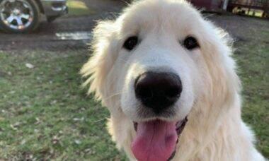 Assassinato de cachorra com arco e flecha deixa família devastada