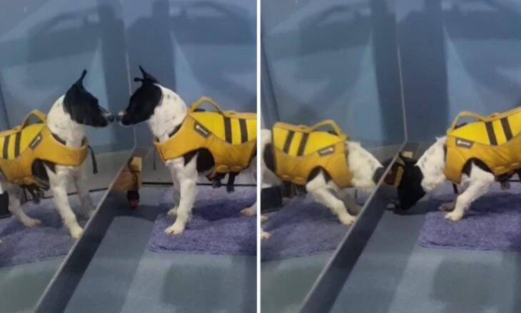 Vídeo: momento em que cão adotado vê seu reflexo pela 1ª vez é de cortar o coração