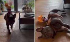 Vídeo: cachorro caubói merece um Oscar pela atuação em cena de tiro