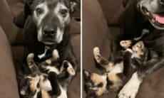 Vídeo: cão tem convicção de que família adotou um gatinho para ele; e os dois não desgrudam