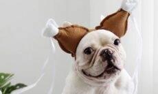 Fotos hilárias: confira as 12 mais divertidas fantasias de halloween para pets