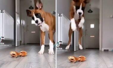 Vídeo de cachorro 'alucinado' com um osso vai alegrar o seu dia!