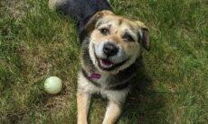 Conheça Heaven, a cadela que venceu o concurso de mais belo cão de abrigo do mundo