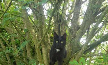 Desafio enlouquece a internet: você consegue achar o 2º gato na foto?