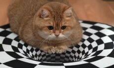 Vídeo: gato 'paira' sobre ilusão de ótica pintada no chão e deixa a web perplexa