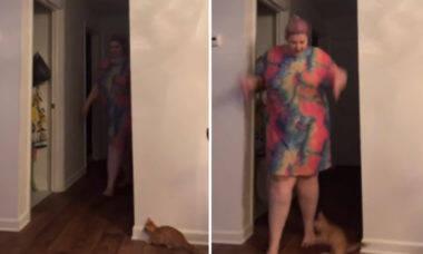 Vídeo hilário: gato arma um susto perfeito na dona