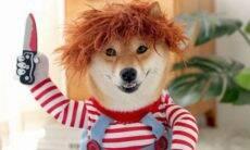 Cães 'aterrorizam' a internet fantasiados de Chucky; o seu pode entrar na brincadeira