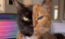 Vídeo com gata de duas faces faz a internet inteira perguntar: é de verdade?