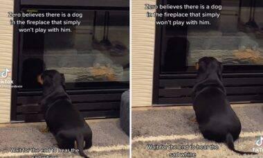 Vídeo: cãozinho chora toda vez que o seu reflexo no vidro não quer brincar