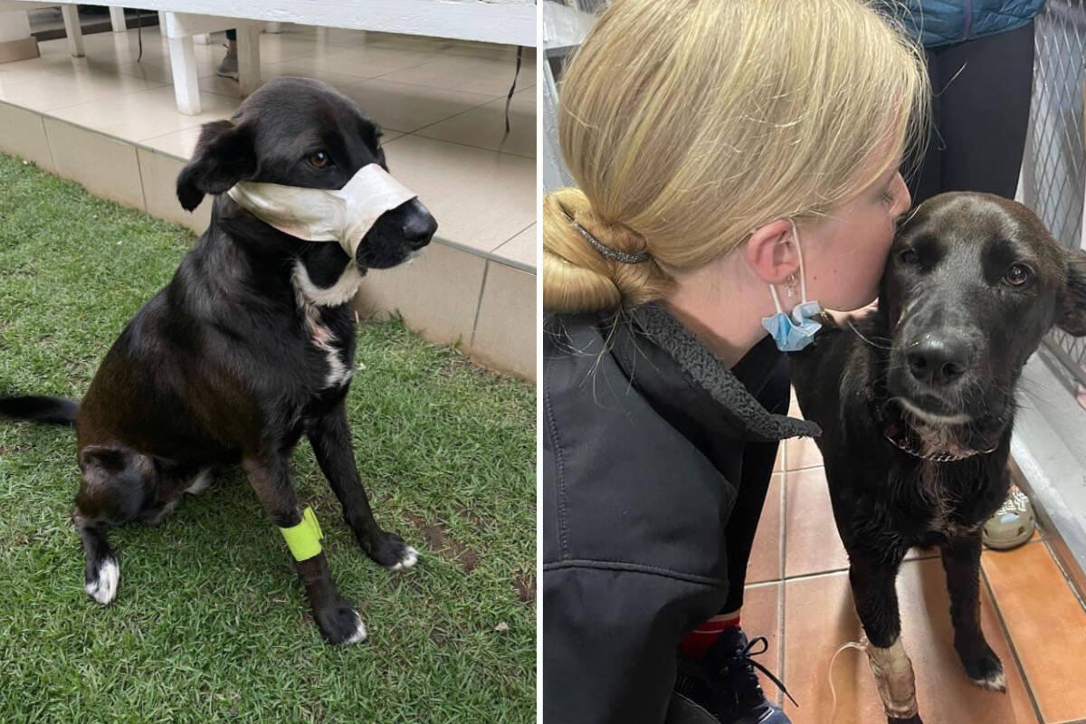 Cão heroico salva a família atacada por dois bandidos armados