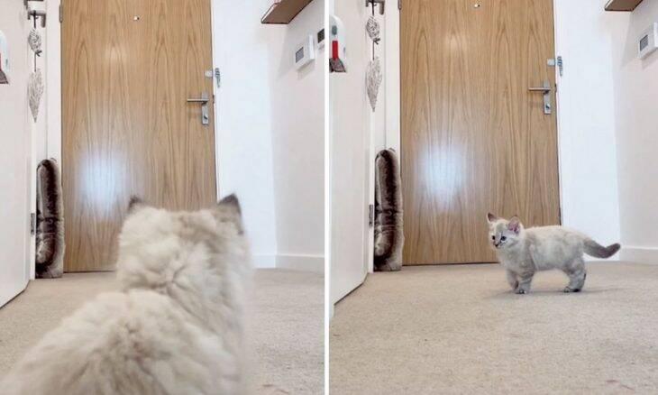 Vídeo: reação de gato quando o dono sai de casa é de cortar o coração