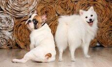 Novo estudo mostra as raças de cães mais obedientes e as mais arruaceiras